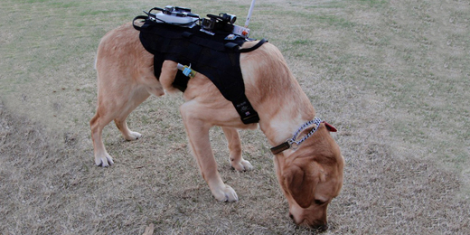 Emergency Response Teams Combine Mobile Robots, Drones, and Dogs